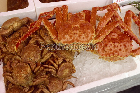 crabs on ice for sale in