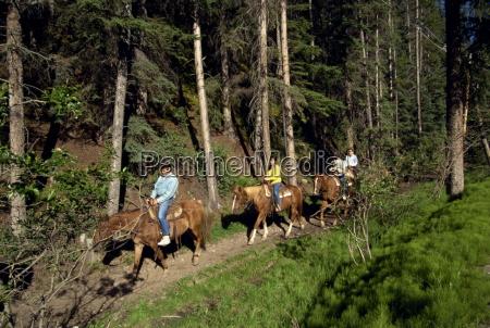 japanese tourists horse riding banff national