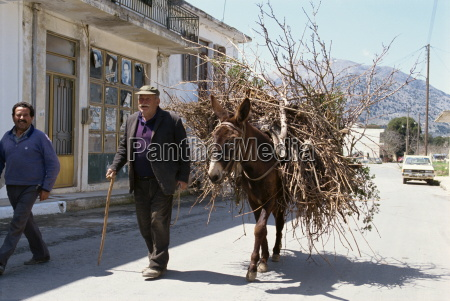old man with donkey carrying firewood