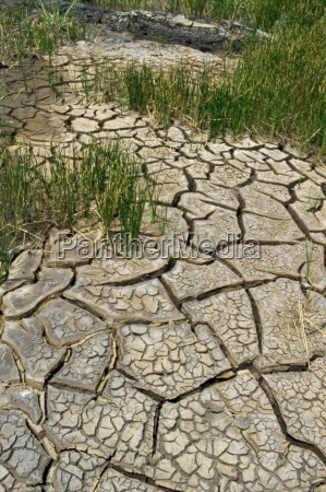 dry ground near the pitch lake