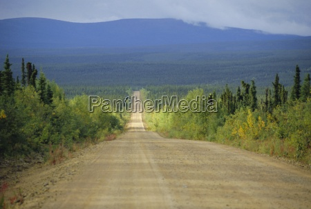 taylor highway gravel road through pine