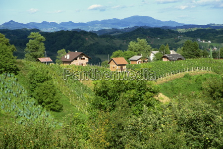 vineyards below small houses with hills