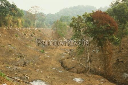 deforestation for farmland cleared by slash