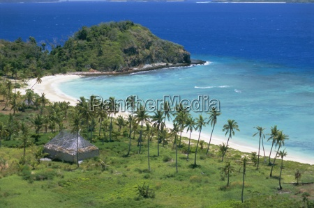 coconut plantation and old farmhouse beside