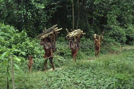 yanomami indian women collecting wood brazil
