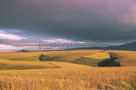 overberg landscape western cape south africa