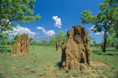 termite mounds kakadu national park northern
