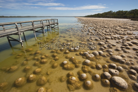 thrombolites a variey of microbialite or