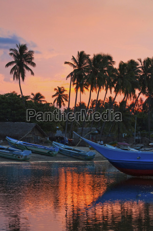 boats and palm trees at sunset