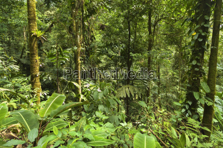 jungle at arenal hanging bridges where