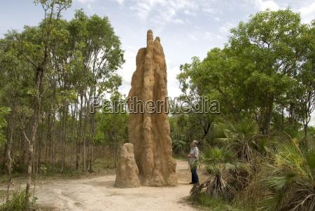 castle termite hill litchfield national park