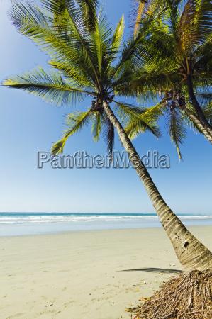 the white sand palm fringed beach