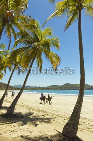 horse riders on beautiful palm fringed