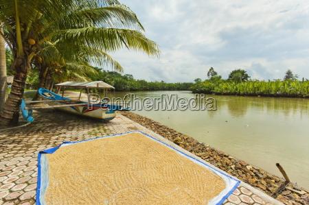 rice drying by the cijulang river