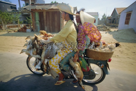 motorcyclist and passenger carrying ducks vietnam