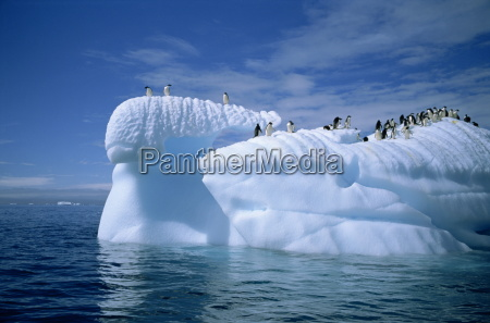 adelie penguins on icebergs antarctica polar