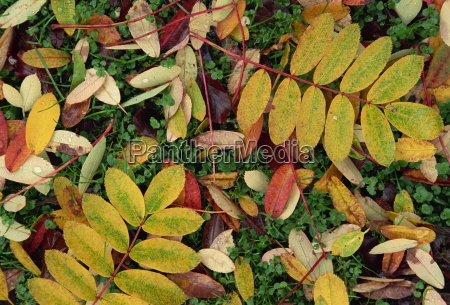 overhead view of autumn fall leaves