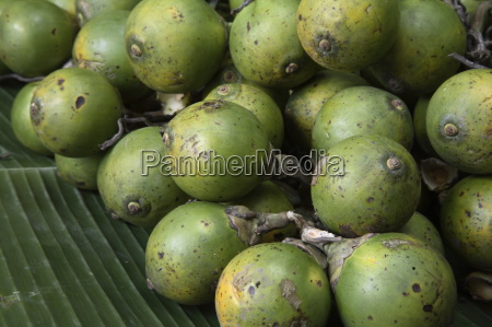 betel nut reported to be anti