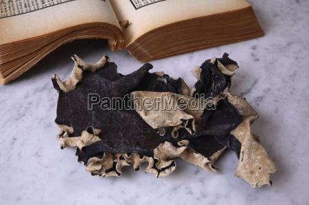 black mushroom for traditional chinese medicine