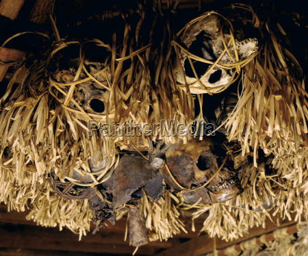 trophy skulls from headhunting hang on