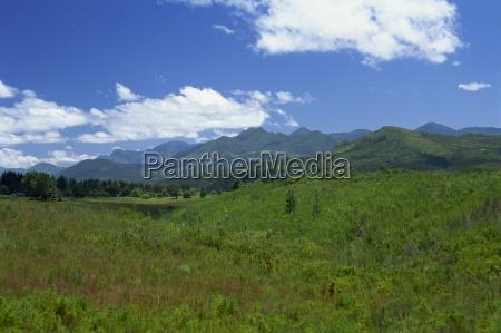 fynbos cape vegetation and the quteniqua