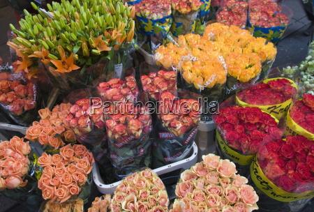 tulips for sale in the bloemenmarkt