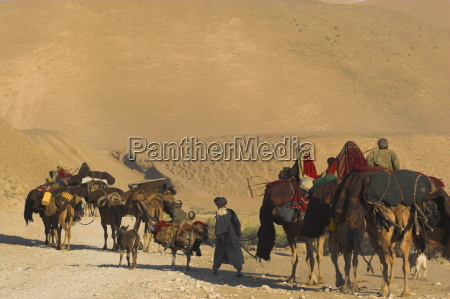 kuchie nomad camel train between chakhcharan