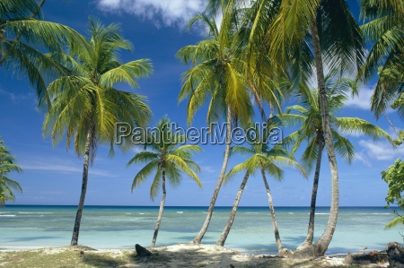 tropical landscape of palm trees with