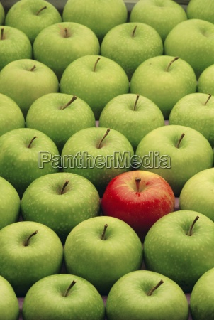 single red apple among a number