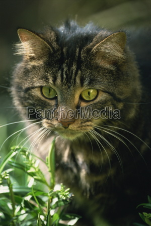 portrait of a pet cat