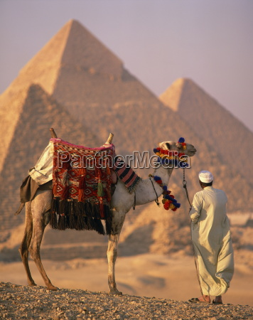camel with woven saddle cloth being