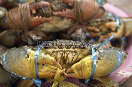 close up of crabs for sale