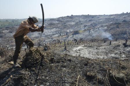 man slashing vegetation on a burnt