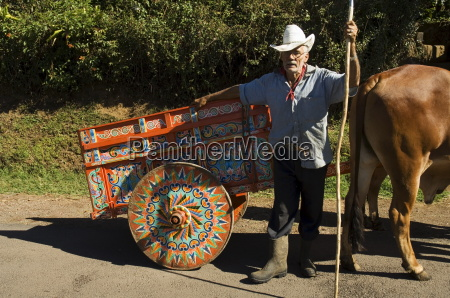 man with decortated ox cart central