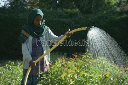 woman watering crops mekele ethiopia africa