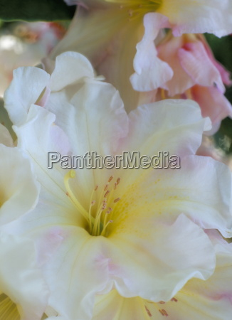 close up of white stamen and