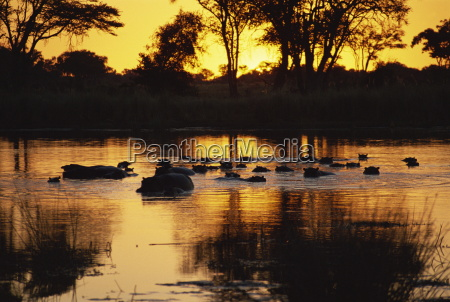 tranquil scene of a group of