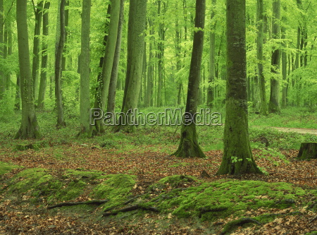 tree trunks and moss in woodland