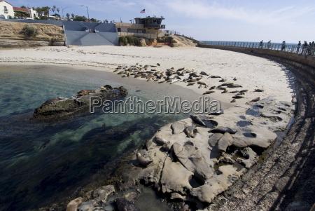 childs beach with harbor seals la