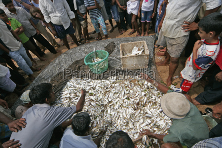 people crowd around auction of fish