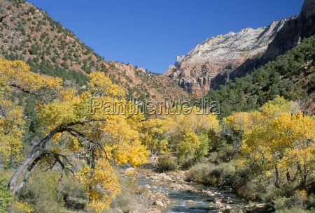 cottonwood trees on the banks of