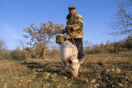truffle producer with pig searching for