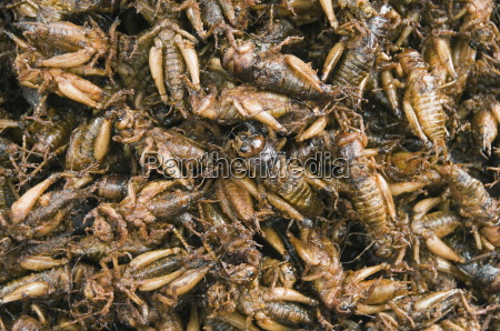 cooked crickets for sale in market