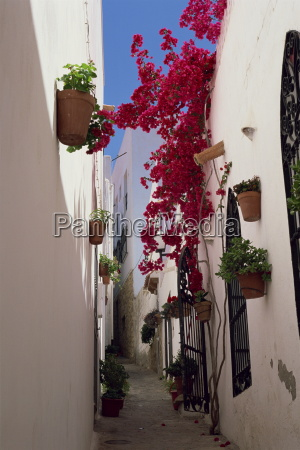 bougainvillea in a narrow whitewashed street