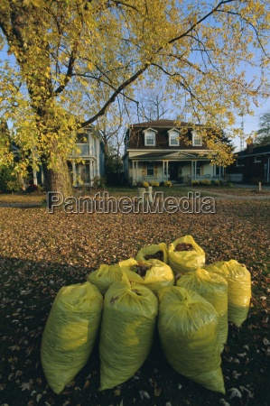 bags of fallen autumn leaves toronto