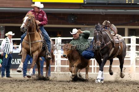 calgary stampede stampede park calgary alberta
