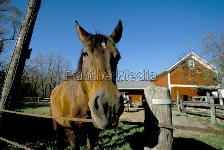 horse and farm near kent connecticut