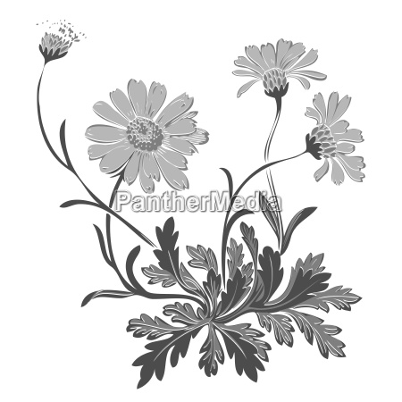 hand drawn illustration of twig with