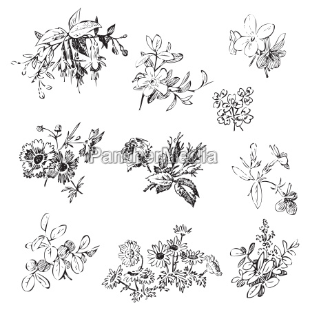 meadow flower and leaf set vector
