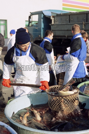 vendor fishing out live carp from